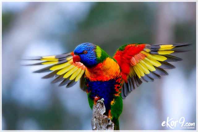 Menakjubkan Inilah 9 Burung Paling Indah Di Dunia Salah Satunya Asli Habitat Indonesia Dunia Fauna Hewan Binatang Tumbuhan Dunia Fauna Hewan Binatang Tumbuhan