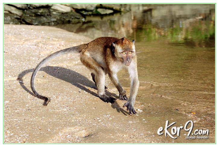 gambar hewan omnivora beserta penjelasannya, hewan omnivora contohnya, hewan omnivora carnivora herbivora, hewan omnivora dan contoh, contoh hewan omnivora karnivora herbivora, pengertian hewan omnivora dan contohnya, contoh hewan omnivora dan cirinya, contoh hewan omnivora dalam bahasa inggris, hewan omnivora dan makanannya, hewan omnivora dan makananya, hewan omnivora dan nama latinnya, hewan golongan omnivora