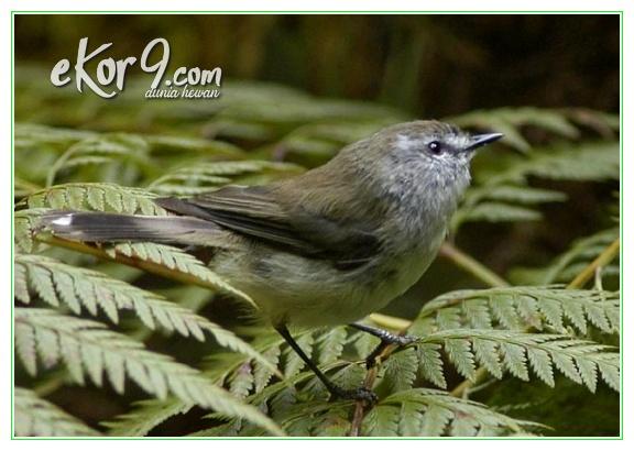 burung kecil dunia, burung kecil termahal di dunia, burung paling besar di dunia, burung paling besar dunia, burung paling kecil di dunia