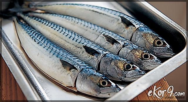 ikan mackerel masak, ikan mackerel masak kari, ikan mackerel dalam bahasa melayu, ikan mackerel bakar, ikan mackerel masak kicap, ikan mackerel masak apa sedap, ikan mackerel vs sarden, ikan mackerel masak lemak, ikan langka ditemukan di aliran lahar merapi, ikan salmon, ikan tongkol, ikan raksasa amazon berhasil ditemukan
