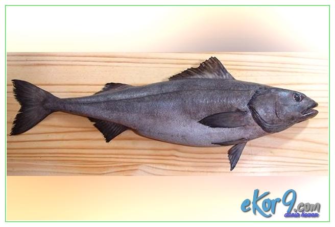 ikan yang boleh dimakan dalam pantang, ikan yang boleh dimakan semasa dalam pantang, ikan yg boleh dimakan pesakit gout, ikan yang boleh dimakan oleh pesakit gout, ikan yang boleh dimakan pesakit gout asam urat, jenis ikan yang boleh dimakan semasa dalam pantang, jenis ikan yang boleh dimakan semasa pantang, ikan yang boleh dimakan masa pantang