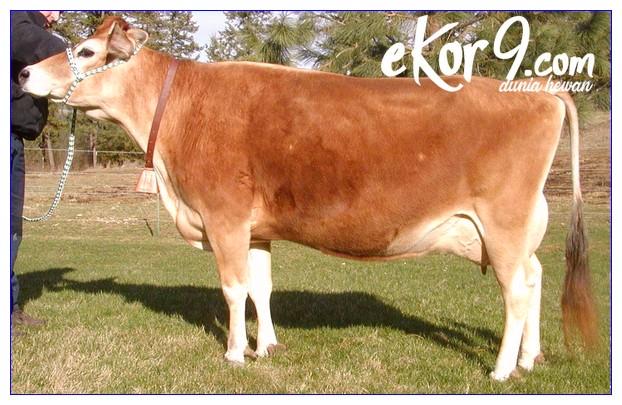 pakan sapi perah dara, pakan sapi perah fermentasi, pakan sapi perah jantan, pakan sapi perah pdf, pakan sapi perah yang baik, pakan sapi perah yg baik, pakan ternak sapi perah fermentasi, pakan ternak sapi perah pdf, pakan ternak sapi perah yang baik, pakan yang bagus untuk sapi perah, pakan yang baik untuk sapi perah, pemberian pakan sapi perah dara, pemberian pakan sapi perah laktasi, pemberian pakan sapi perah pdf, sni pakan sapi perah laktasi