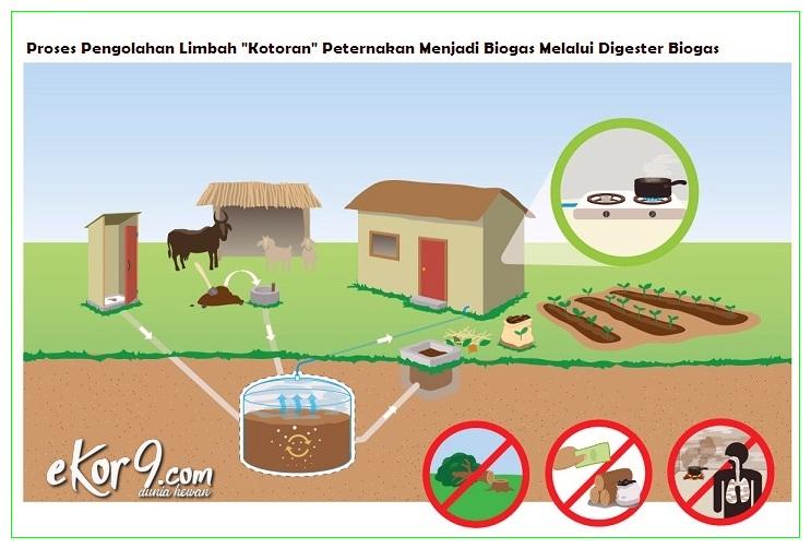 proses pengolahan limbah peternakan menjadi biogas, cara penanganan limbah peternakan, cara penanganan limbah peternakan sapi perah dan potong, cara pengolahan limbah peternakan, cara untuk menangani limbah kotoran ternak pada suatu peternakan, proses pengolahan limbah peternakan