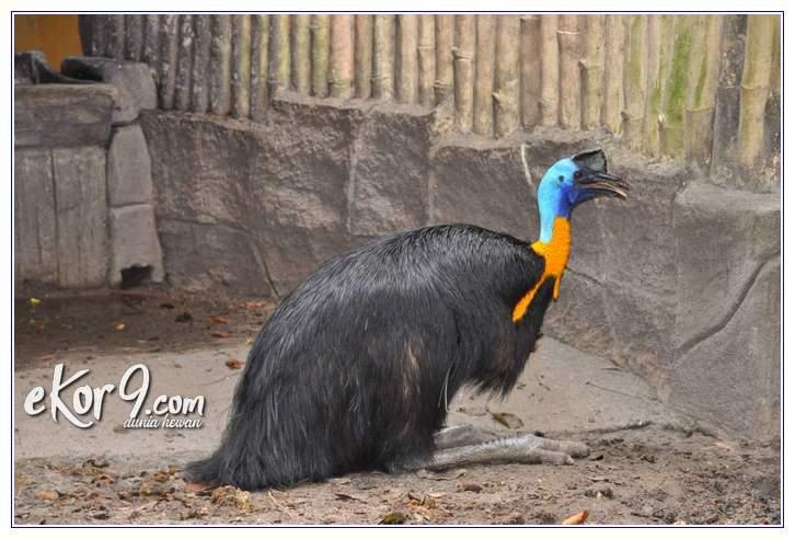 hewan langka yang ada di pulau papua, contoh hewan langka dari papua adalah, hewan langka yang berasal dari papua adalah, jenis hewan langka berikut yang berasal dari papua adalah, contoh hewan langka dari papua, nama hewan langka dari papua, jenis hewan langka asli papua adalah, jenis hewan langka asli papua