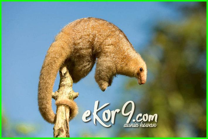 hewan pemakan semut, hewan pemakan semut 5 huruf, hewan pemakan semut disebut, hewan pemakan semut huruf terakhir r, hewan pemakan semut rangrang, hewan pemakan semut merah, hewan pemakan semut raksasa, gambar hewan pemakan semut, jenis hewan pemakan semut