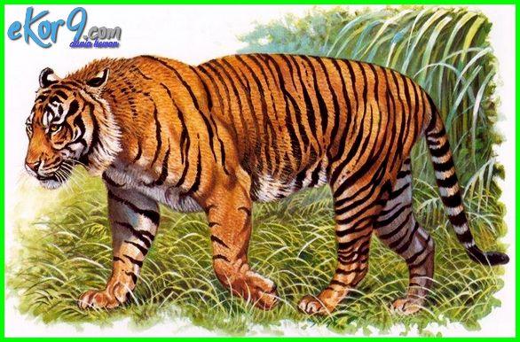 hewan yang sudah punah asli indonesia, hewan yang sudah punah asal indonesia, hewan sudah punah di indonesia, hewan telah punah di indonesia, hewan punah di indonesia beserta asalnya