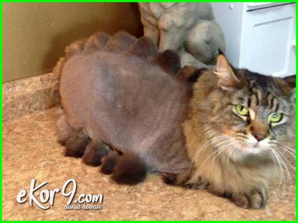 gambar kucing lucu sedunia, gambar kucing lucu galau, gambar kucing lucu dan imut, gambar kucing lucu banget