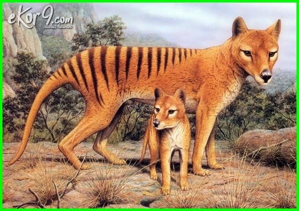 hewan indonesia punah, hewan indonesia yang punah, hewan indonesia yg punah, hewan indonesia sudah punah, daftar hewan punah indonesia, hewan indonesia yg telah punah, hewan endemik indonesia yang punah