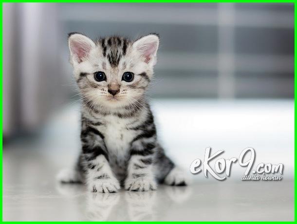 5 Foto Bayi Hewan Yang Lucu Sangat Menggemaskan Dunia Fauna Hewan Binatang Tumbuhan Dunia Fauna Hewan Binatang Tumbuhan