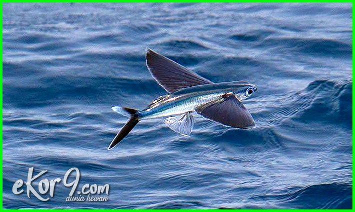 Keren Selain Berenang 3 Hewan Air Ini Juga Jago Terbang Dunia Fauna Hewan Binatang Tumbuhan Dunia Fauna Hewan Binatang Tumbuhan