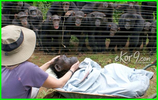 hewan bersedih, gambar hewan bersedih, foto hewan bersedih, binatang bersedih, foto hewan menangis gambar hewan menangis