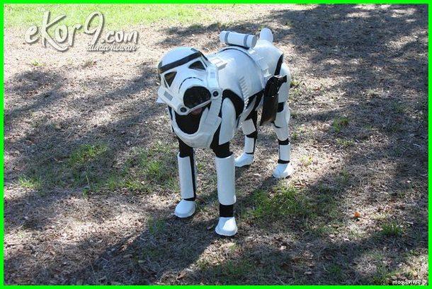 anjing lucu pakai baju, anjing lucu pake baju, baju anjing murah, baju anjing lucu, jual baju anjing bermerk, gambar baju anjing edan, baju untuk anjing besar