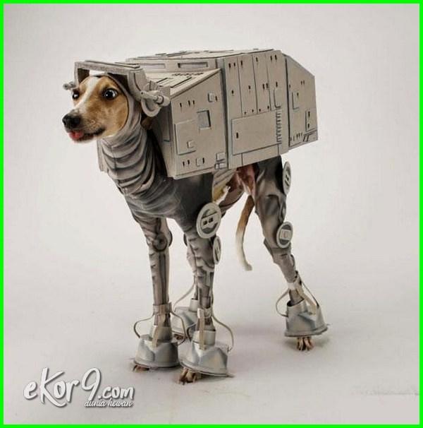 gambar anjing pakai baju, gambar anjing lucu pakai baju, gambar anjing memakai baju, hukum memakai baju ada gambar anjing, hukum memakai baju gambar anjing
