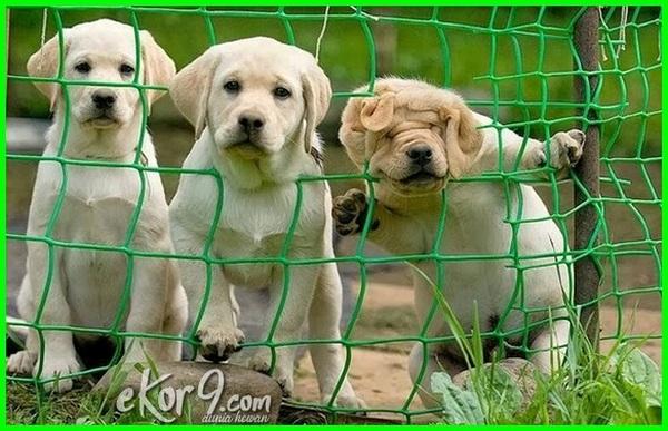 di cari anjing lucu, ,ekspresi anjing lucu tersangkut jaring, expresi anjing lucu, anjing lucu foto