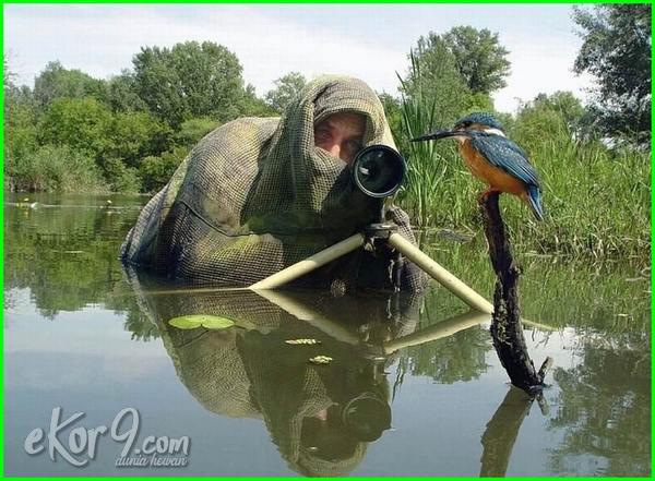 fotografi fotografer alam liar