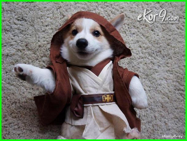 gambar anjing pakai baju, gambar anjing lucu pakai baju, gambar anjing memakai baju