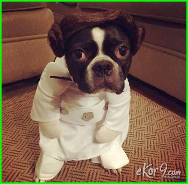 anjing pakai baju polisi star wars, anjing pake baju persib cewek wkwkw