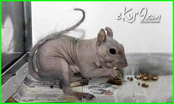 hewan yg tak berbulu, hewan yang tidak mempunyai bulu tebal