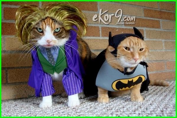kucing lucu pakai baju, foto kucing memakai baju lucu, foto kucing pake baju lucu, gambar kucing pakai baju tentara, kucing yang pakai baju