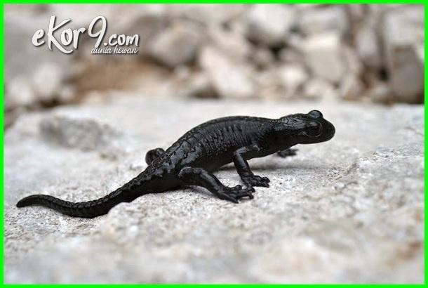 hewan paling lama hamil, hewan dengan masa kehamilan terpanjang, binatang yang mempunyai masa kehamilan paling lama
