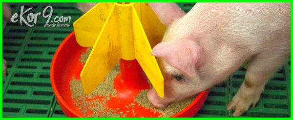 beternak hewan yang mudah dan menguntungkan, ternak binatang paling menguntungkan, jenis hewan yang mudah dipelihara, beternak hewan paling menguntungkan