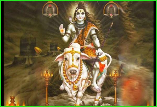 nama hewan peliharaan dewa, 10 hewan peliharaan dewa, hewan peliharaan dewa, hewan hewan peliharaan dewa, hewan peliharaan para dewa