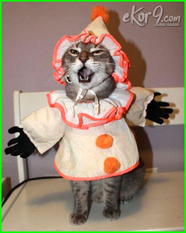 kucing bergaya lucu, gambar kucing bergaya, foto kucing bergaya lucu, gambar kucing bergaya lucu, poto kucing bergaya, kucing pandai bergaya, wallpaper kucing bergaya, video kucing bergaya, dp kucing bergaya, dp bbm kucing bergaya