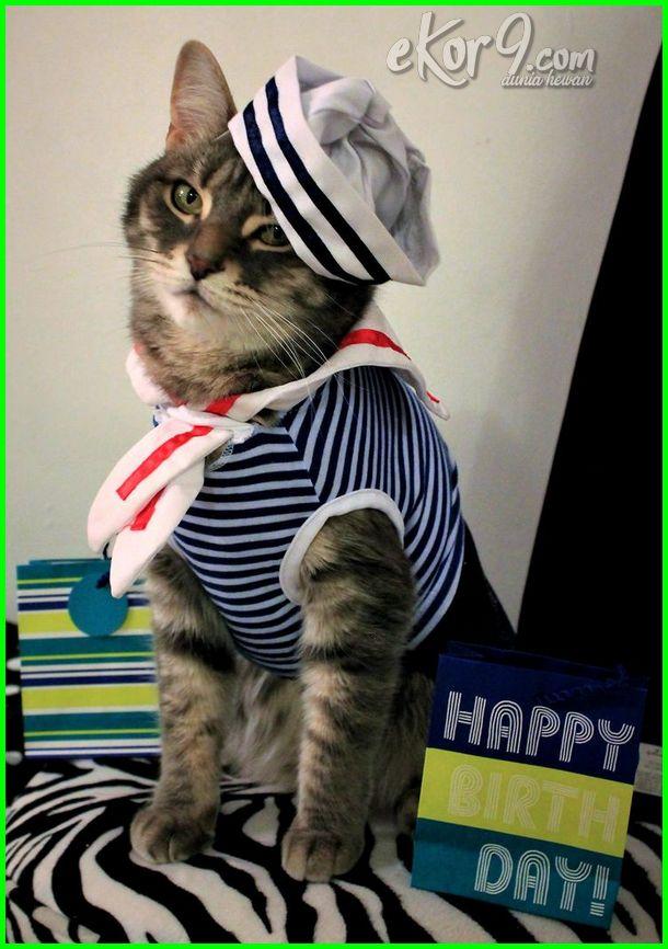 gambar kucing pakai baju melayu, gambar kucing pakai baju raya, gambar kucing lucu pakai baju, hukum kucing pakai baju, gambar kucing pakai baju kurung