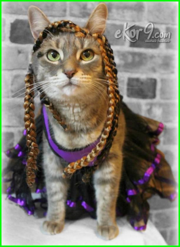 kucing pakai baju lucu, kucing pakai baju pengantin, kucing pakai baju sekolah, kucing pakai baju kurung, kucing pakai baju melayu, gambar kucing pakai baju, kucing pakai baju raya, kucing pakai baju baby, kucing comel pakai baju, gambar kucing pakai baju pengantin