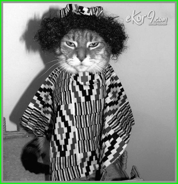 kucing pake baju muslim, kucing persia pakai baju, kucing putih pakai baju, video kucing pakai baju, foto kucing pakai baju pengantin
