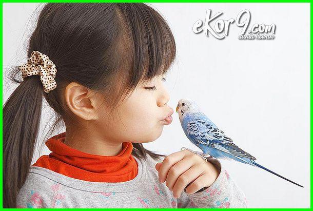 manfaat memelihara hewan untuk anak, manfaat memelihara hewan piaraan, manfaat memelihara hewan dan tumbuhan, manfaat memelihara hewan ternak, manfaat memelihara hewan, manfaat memelihara hewan bagi anak, manfaat memelihara anjing dirumah