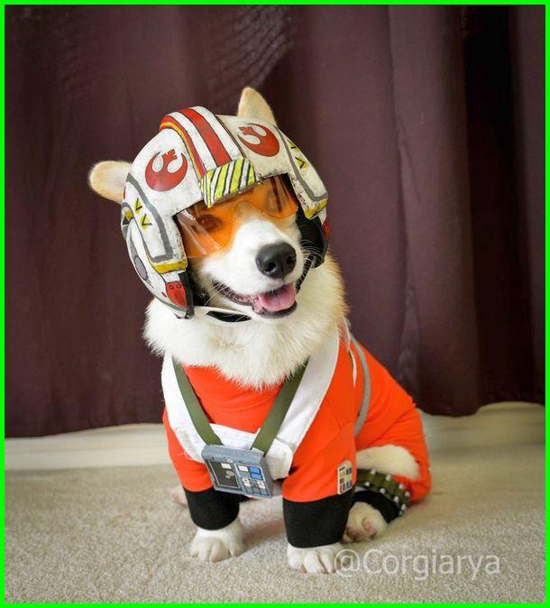 cosplay anjing lucu, baju anjing lucu, anjing dengan pakaian yang lucu
