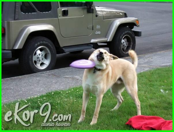 foto anjing lucu dan menggemaskan, foto anjing lucu sekali, foto anjing lucu dan cantik, anjing kena pukul