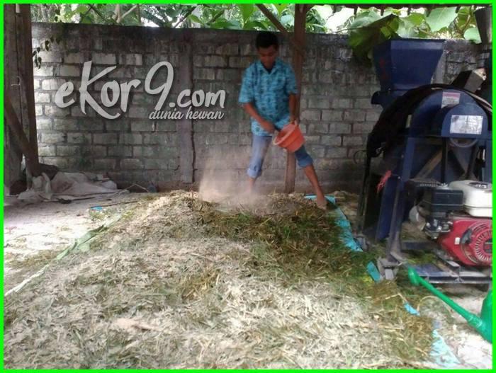 cara membuat silase rumput gajah, cara membuat silase pakan sapi, cara membuat silase pakan ternak, cara membuat silase untuk pakan sapi, cara membuat silase ikan, membuat silase batang pisang, cara membuat silase batang pisang, bahan membuat silase, cara membuat silase yang baik, pembuatan silase daun singkong, pembuatan silase dan hay, pembuatan silase dari jerami padi, pembuatan silase dari rumput gajah, pembuatan silase daun jagung, cara membuat silase dengan em4