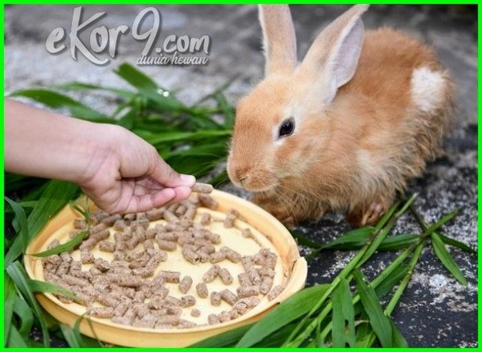 persiapan ternak kelinci, persiapan budidaya kelinci, persiapan sebelum memelihara kelinci, persiapan kelahiran anak kelinci, tips sebelum membeli kelinci