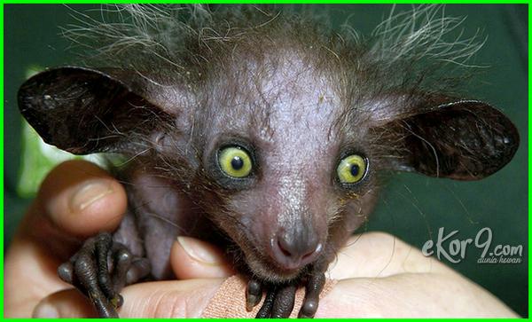 gambar binatang paling jelek, binatang yang paling jelek, binatang yg paling jelek, nama binatang paling jelek binatang paling jelek sedunia, top 20 binatang paling jelek di dunia, binatang paling jelek di dunia