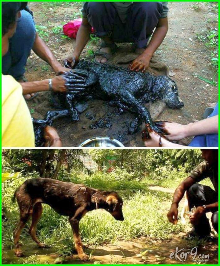 foto penyelamatan hewan, gambar penyelamatan hewan, cerita penyelamatan hewan, 7 penyelamatan hewan berujung persahabatan, kisah penyelamatan hewan