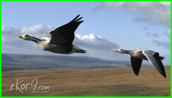 hewan yang hidup di udara disebut, gambar hewan yang hidup di darat air dan udara, perbedaan hewan yang hidup di darat air dan udara, ciri ciri hewan yang hidup di air darat dan udara, gambar hewan yang hidup di udara, sistem gerak hewan yang hidup di udara, hewan yang hidupnya di udara