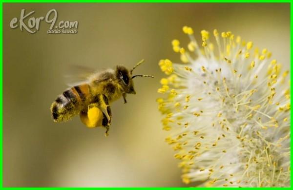 nama hewan hidup di udara, hewan yang hidup di udara dalam bahasa inggris, 10 hewan hidup di udara, gambar binatang yg hidup di udara, hewan hewan yang hidup di udara, jenis hewan yg hidup di udara, kelompok hewan yang hidup di udara, macam hewan yang hidup di udara, nama hewan yang hidup di udara