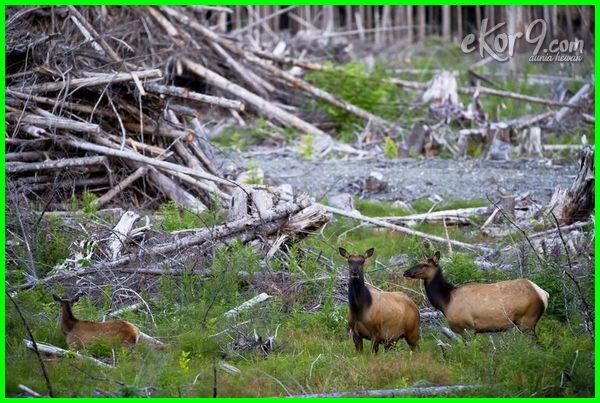 fragmentasi dan degradasi habitat adalah meliputi, contoh fragmentasi & degradasi habitat, fragmentasi dan hilangnya habitat, jurnal fragmentasi habitat pdf, maksud fragmentasi habitat, makalah fragmentasi habitat, pengertian fragmentasi habitat, sebab fragmentasi habitat, terjadinya fragmentasi habitat