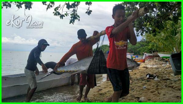 mancing ikan tuna terbesar di Indonesia, gambar ikan tuna terbesar di Indonesia dan dunia, penghasil ikan tuna terbesar di Indonesia, negara penghasil ikan tuna terbesar di Indonesia, ikan tuna paling besar di dunia, daerah pemasok ikan tuna terbesar di kepulauan Indonesia, penangkapan ikan tuna terbesar di Indonesia, ikan tuna terbesar dan termahal di Indonesia, poto ikan tuna terbesar di Indonesia