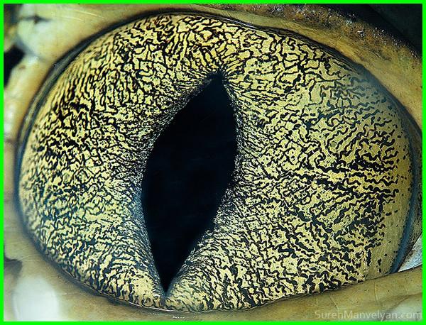 kumpulan mata hewan close up, deretan foto mata hewan, daftar gambar mata hewan di dunia, foto-foto mata hewan, foto-foto mata binatang, foto mata hewan jarak dekat, foto mata binatang dari jarak dekat