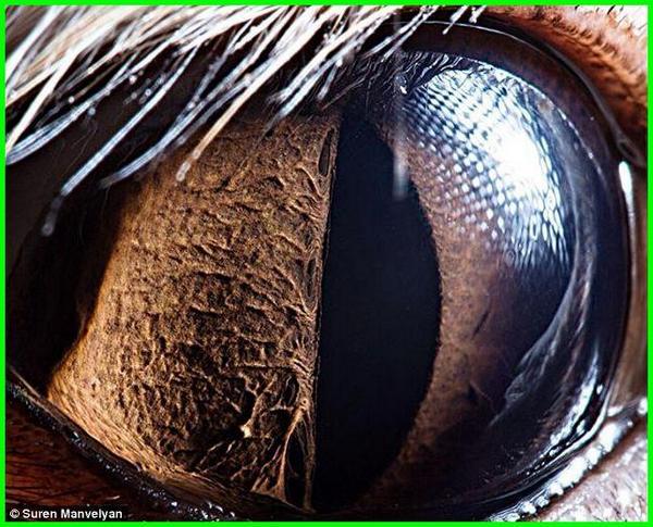 foto mata hewan close up di dunia,foto tes mata hewan, foto hewan menipu mata, foto hewan yang menipu mata