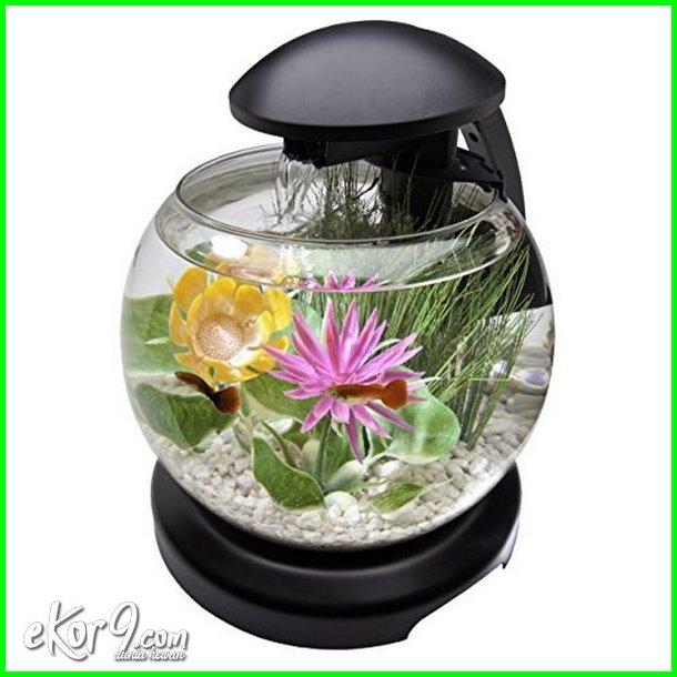 aquarium ikan cupang unik, bentuk akuarium untuk ikan cupang, akuarium untuk ikan cupang, ukuran akuarium ikan cupang, aquarium utk ikan cupang, aquarium mini untuk ikan cupang, variasi aquarium ikan cupang, yang jual aquarium ikan cupang, ikan cupang dalam 1 aquarium