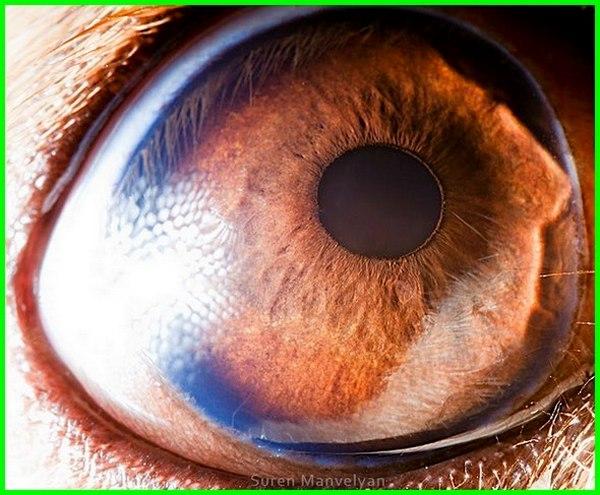 foto hewan yang menipu mata, foto mata hewan close up di dunia, foto tes mata hewan, foto hewan menipu mata