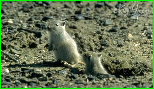 gambar hewan yang hidup di tanah, gambar hewan yang hidup di dalam tanah, hewan yang hidup di tanah, macam hewan yang hidup di tanah, sebutkan hewan yang hidup di tanah, jenis hewan yang hidup di dalam tanah, hewan yang hidup di tanah kering