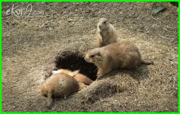 hewan yg hidup dibawah tanah, hewan hidup di tanah, hewan hidup dalam tanah, hewan hidup di dalam tanah, hewan yang hidup di tanah, hewan yang hidup didalam tanah, hewan yang hidup dibawah tanah, hewan yg hidup dalam tanah