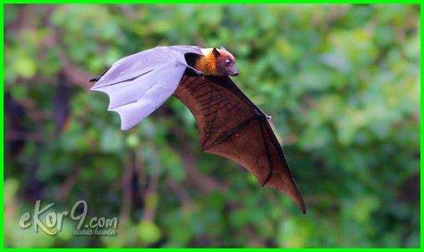 Hewan yang hidup di udara disebut Flying and gliding animals (volant animals), sistem gerak pada hewan yang hidup di udara, sebutkan hewan yang hidup di udara, hewan yang hidup di udara, 10 hewan yang hidup di udara, contoh hewan yang hidup di udara, 5 hewan yang hidup di udara, 10 hewan yg hidup di udara