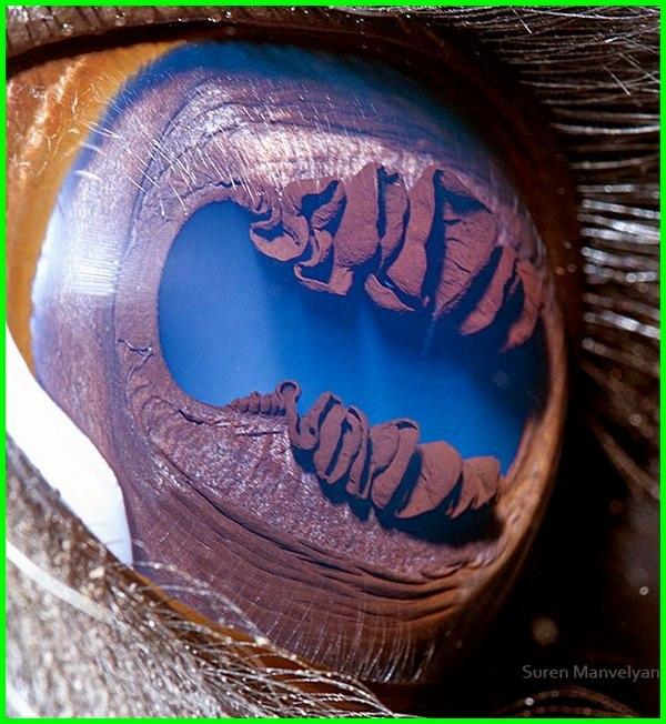 gambar mata hewan tes tipuan satu besar sel ilusi binatang buas yang menipu