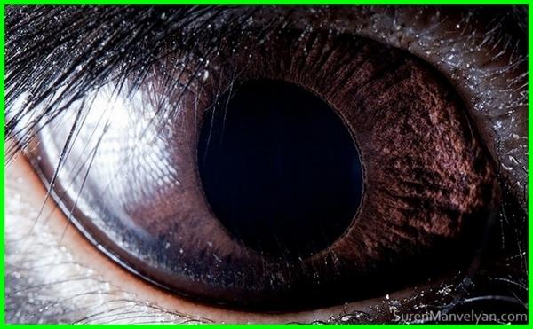 gambar tes mata hewan, gambar sel mata hewan, gambar ilusi mata hewan, gambar hewan menipu mata